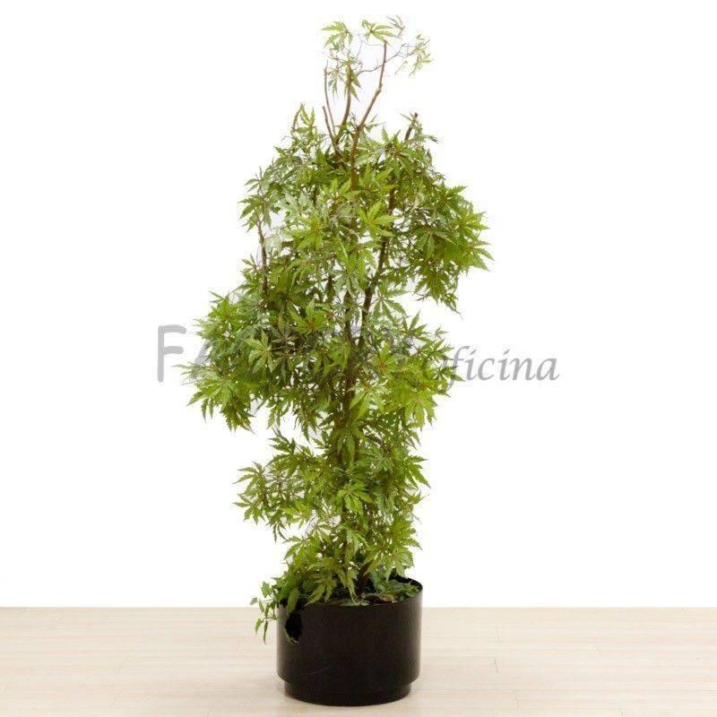 Plantas decorativas fabricadas en pl stico de polietileno for Plantas decorativas