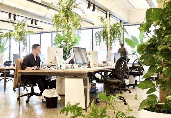 ¿Cuáles son las mejores plantas de oficina?